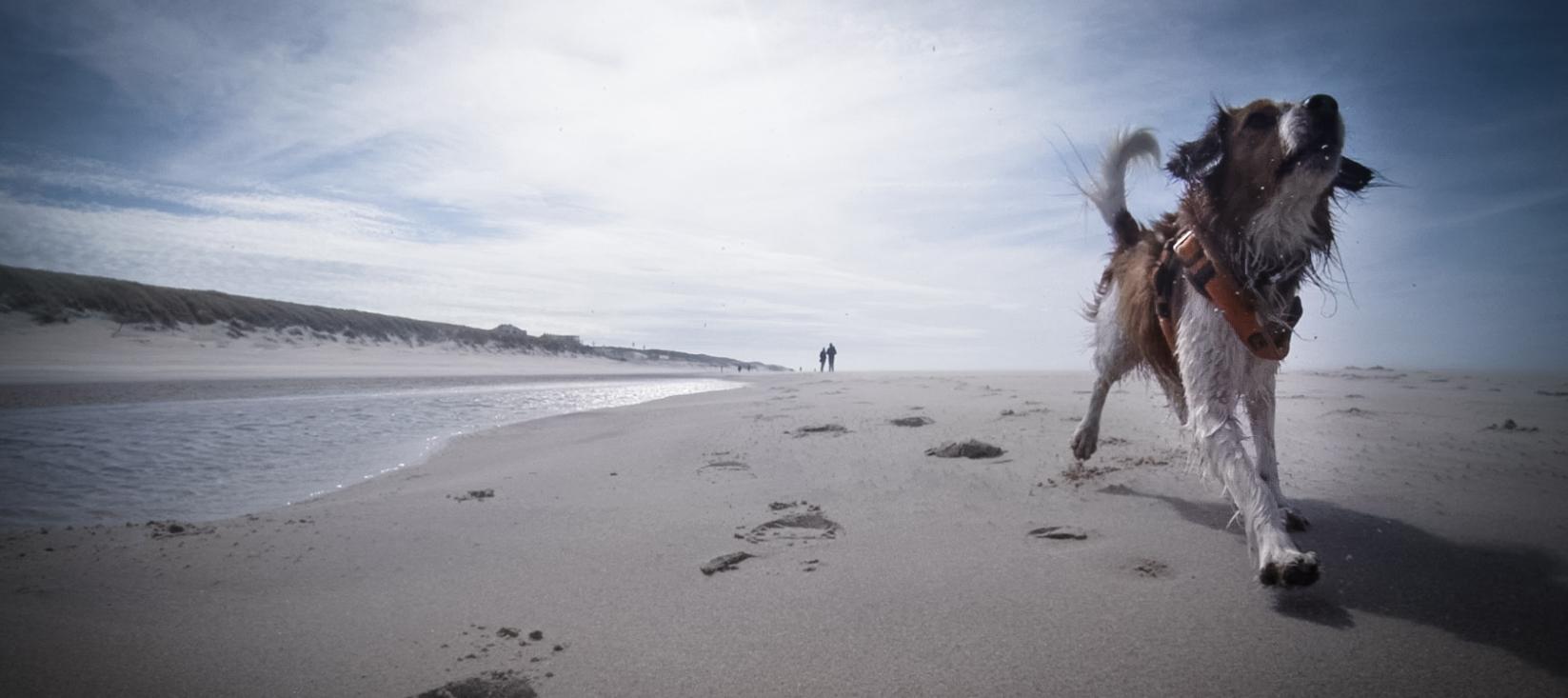 Urlaub auf Texel – Das Paradies für Hunde