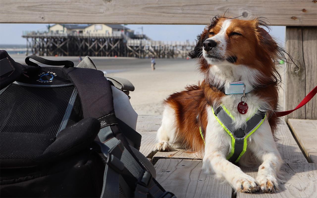 Sankt Peter-Ording – Wind, Meer und Hund