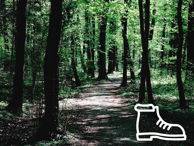 Rundwanderweg im Geisterholz  – Benningloh bei Oelde